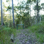 Looking at the  junction of Lyrebird and Rock Lilly Trails (365051)