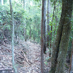 Narrow track east of Wollombi Brook (365138)