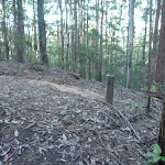 A rocky trail, east of Wollombi Brook