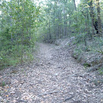 Ridgetop trail, Olney State Forest