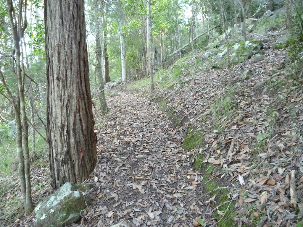Steep hill but gentle track north of Cedar Brush track head