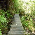 Boardwalk south of Yarramalong (367346)