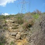 GNW under the powerlines near Greta Rd (367616)