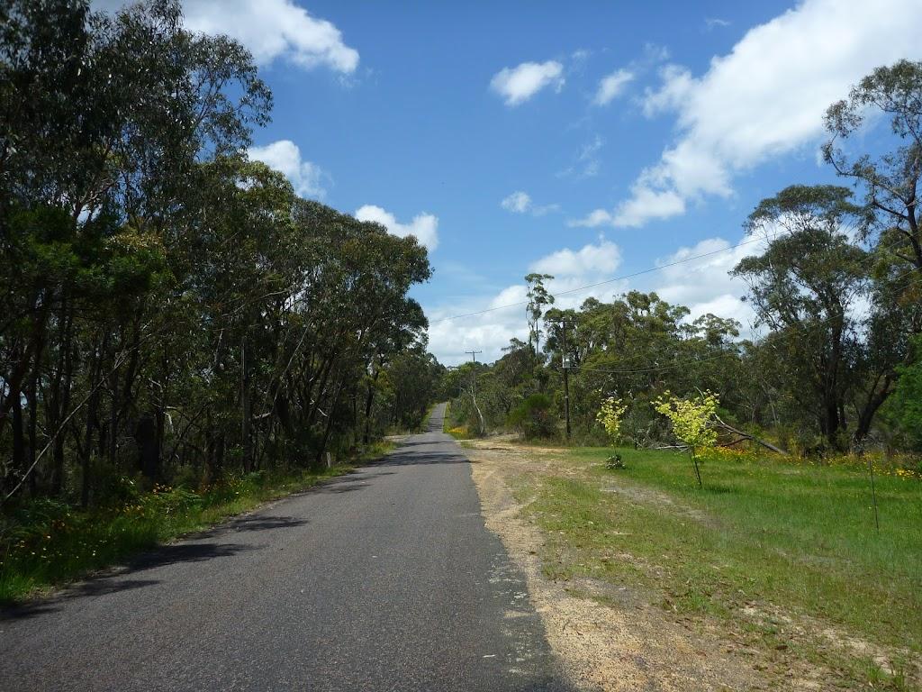 Walking along Forest Road