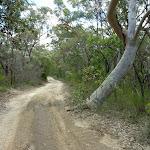 Tooheys Road near the Archery range (368147)