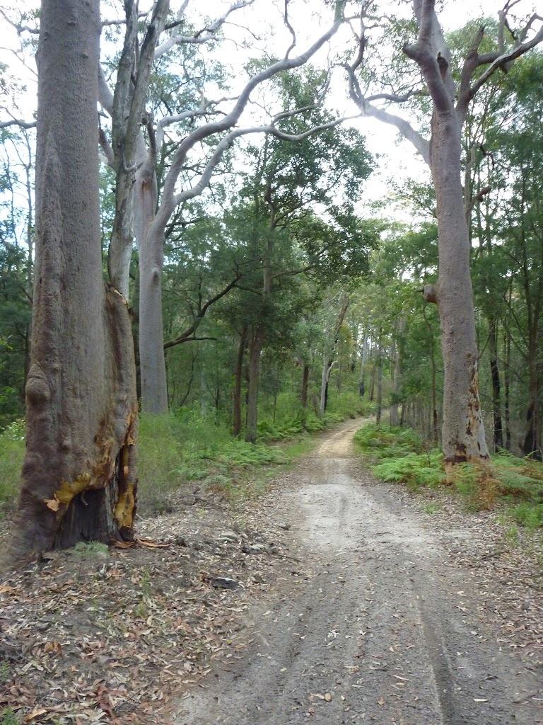 Tooheys Road winding through the tall eucalypt forest