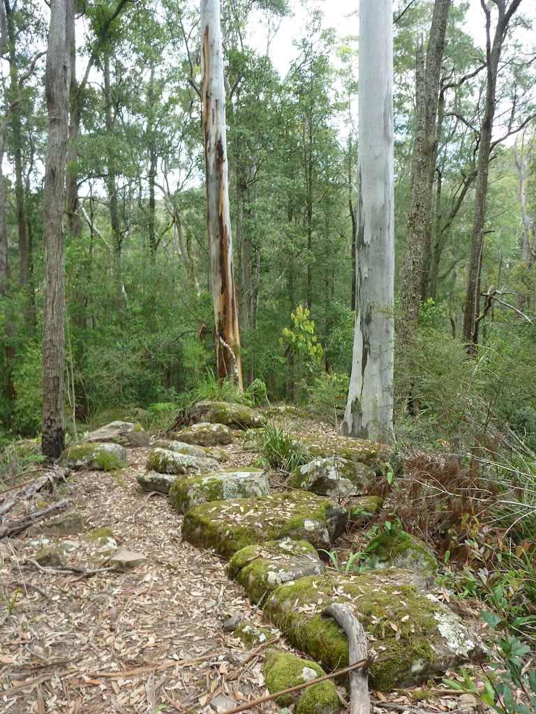 Mossy rocks and tall forest north of or Ourimbah Creek