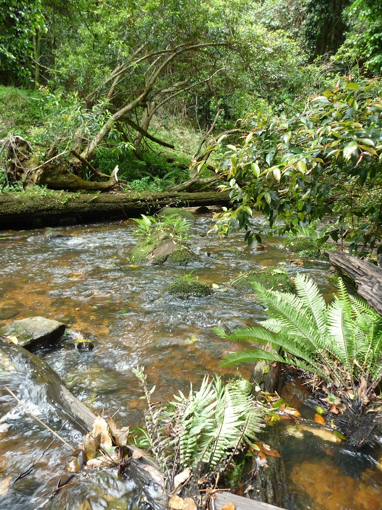 Ourimbah Creek