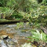 Ourimbah Creek (368875)