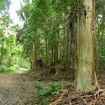 Tall trees near Stringy Bark Point (369160)