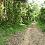 Walking along the Ourimbah Creek Road Trail (369364)