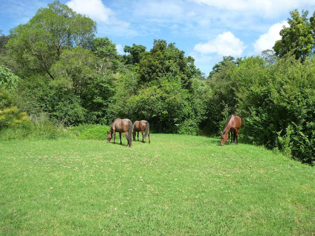 Horses at Hidden Valley