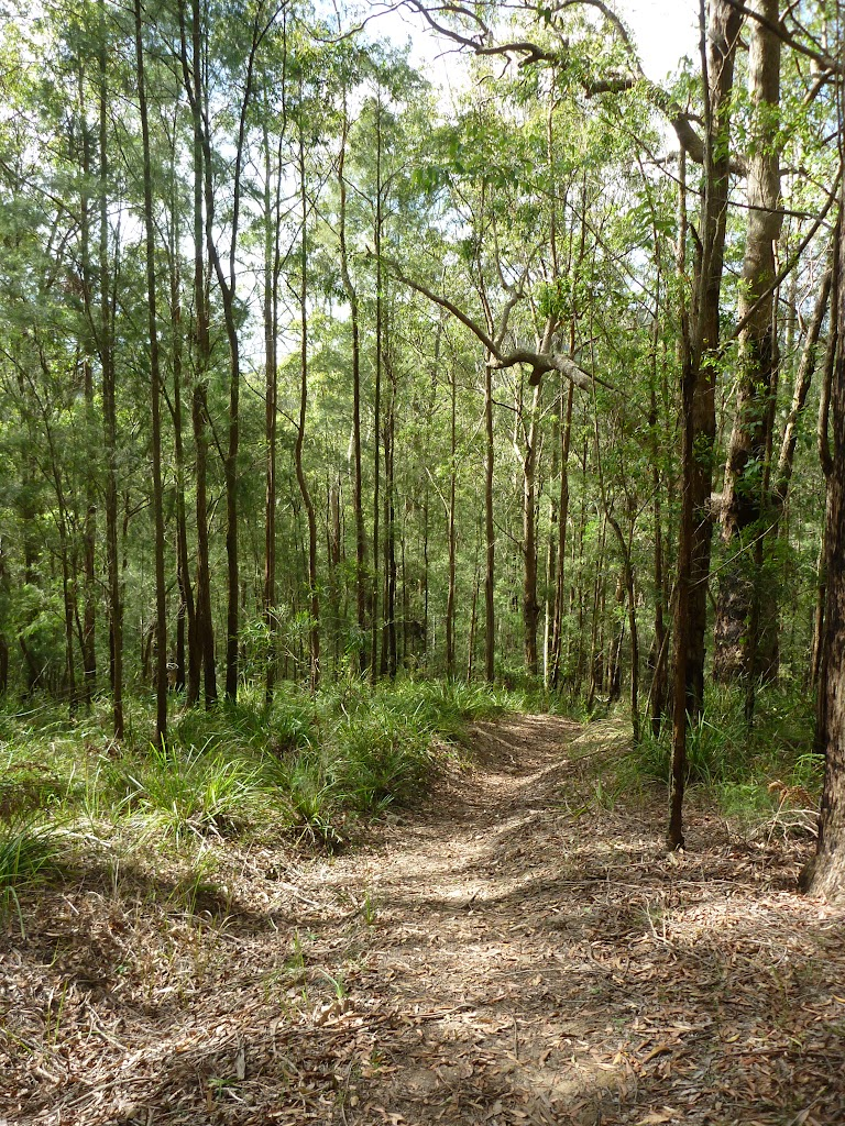 Tall young forest near Ourimbah Creek Road  (369730)