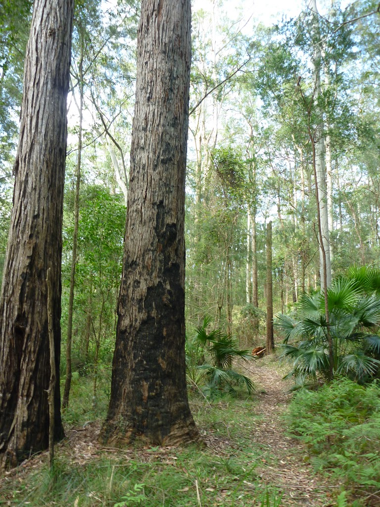 Tall forest in Palm Grove Nature Reserve
