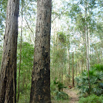 Tall forest in Palm Grove Nature Reserve (369745)