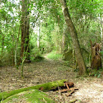 Mossy and cool environement on the north side of Palm Grove NR