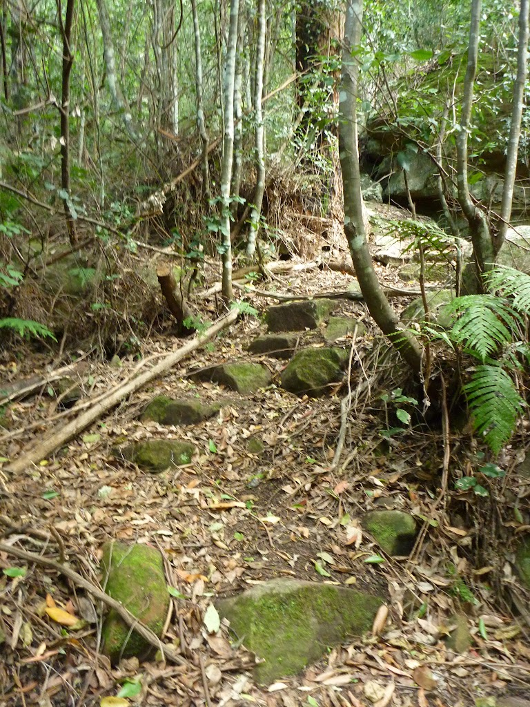 Rocky track winding through the Palm Grove NR
