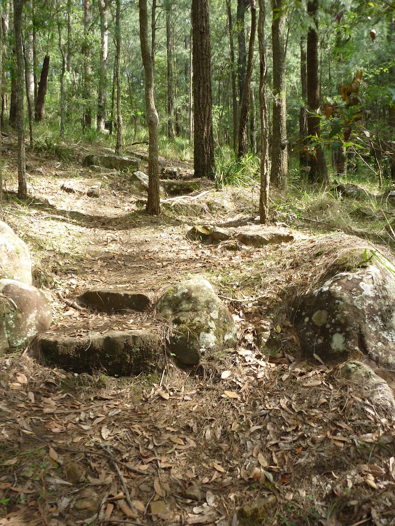 The track on the north side of the ridge in Palm Grove NR