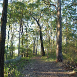 Tall open forest on the ridge in Palm Grove NR