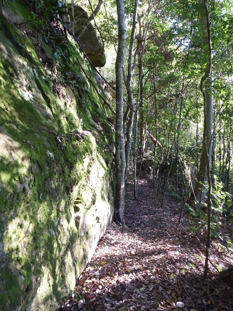 Walking along a mossy rock wall in Palm Grove NR