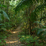 Walking through Palm Grove Nature Reserve
