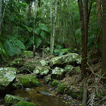 Crossing a small creek in Palm Grove Nature Reserve