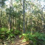Open ferny forest near Kilkenny Road (370417)