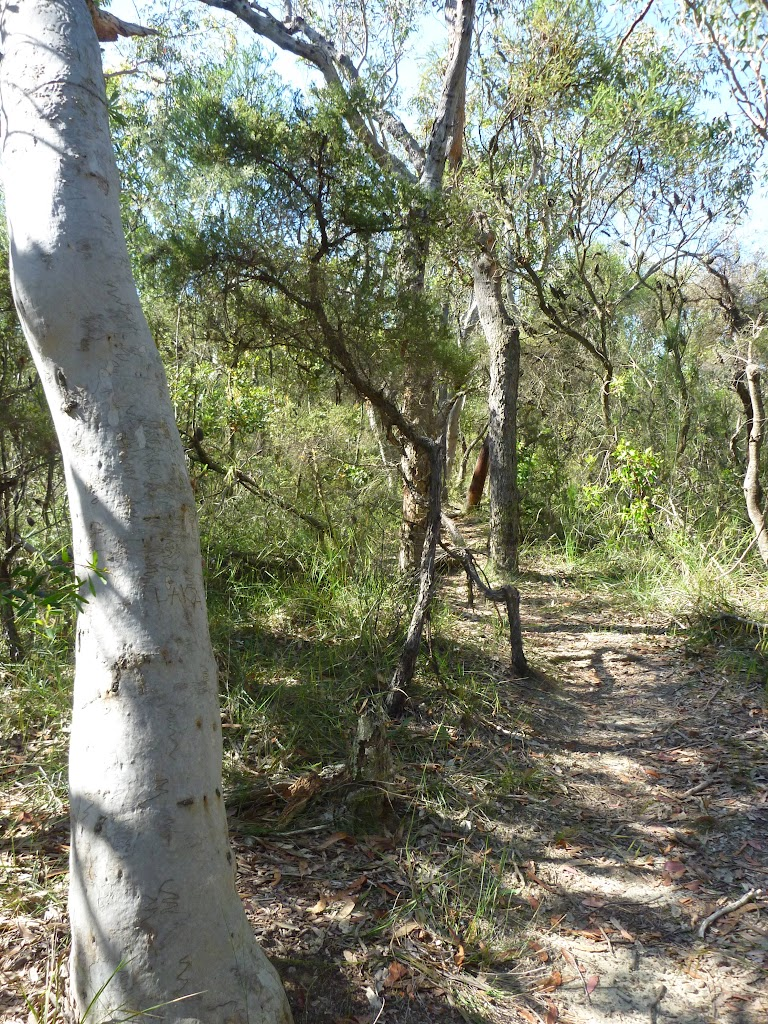 SCribbly gum and heath forest south of Robinson Rd