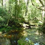 Robinson Creek (371398)