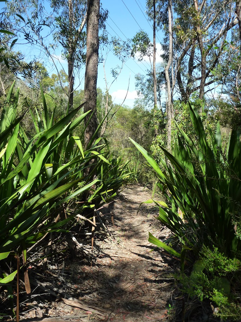 Gymea Lilies north of Somersby Reservoir