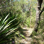 Walking among the gymea lily plants (372292)