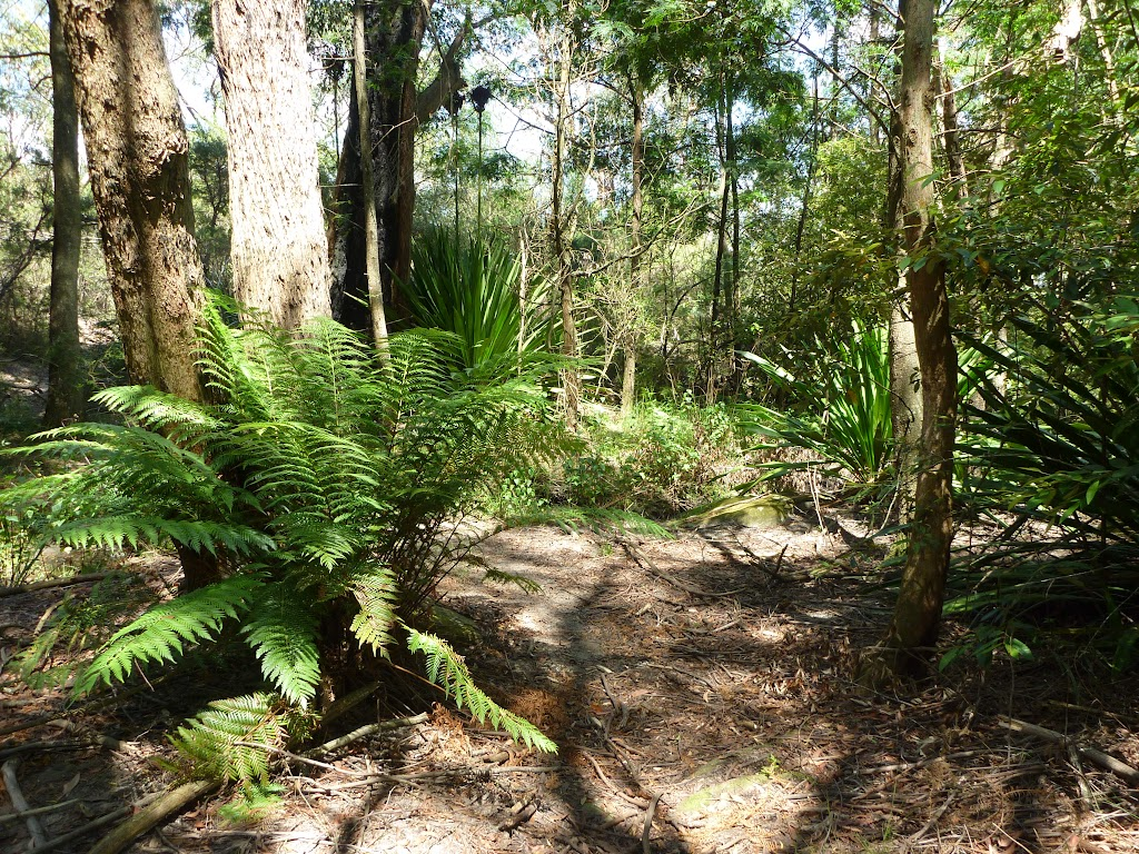 Pleasent ferny gully east of the Lower Mooney Mooney Dam