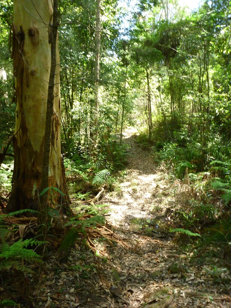 The rocky track north of the Mooney Mooney Creek