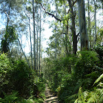 Old Trail below the Mooney Mooney Trackhead (373882)