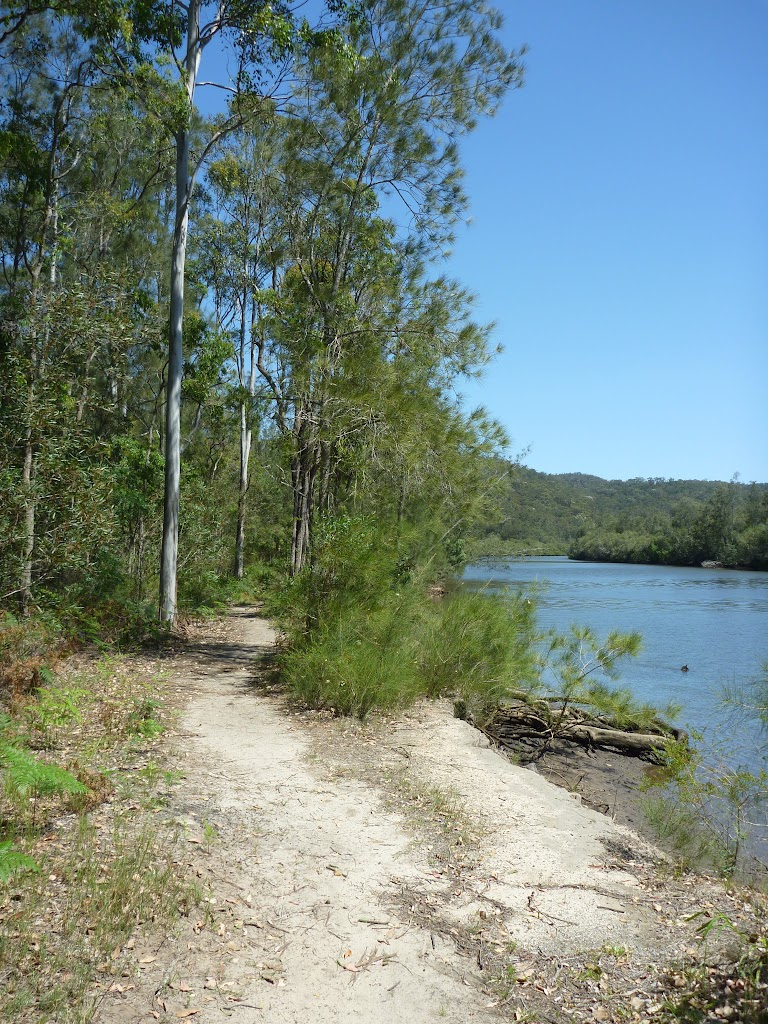 Walking alongside Mooney Mooney Creek (373921)