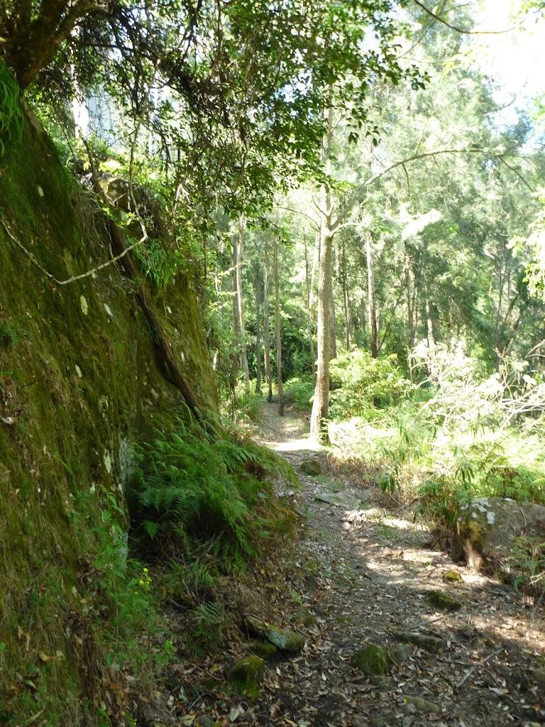 Mossy rock walk west of Phil Houghton Bridge