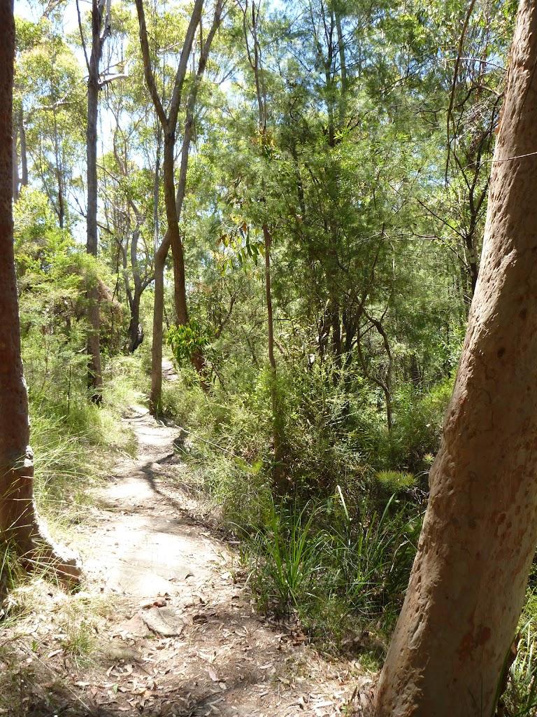 Walking through Lyrebird Gully