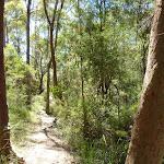 Walking through Lyrebird Gully (376583)