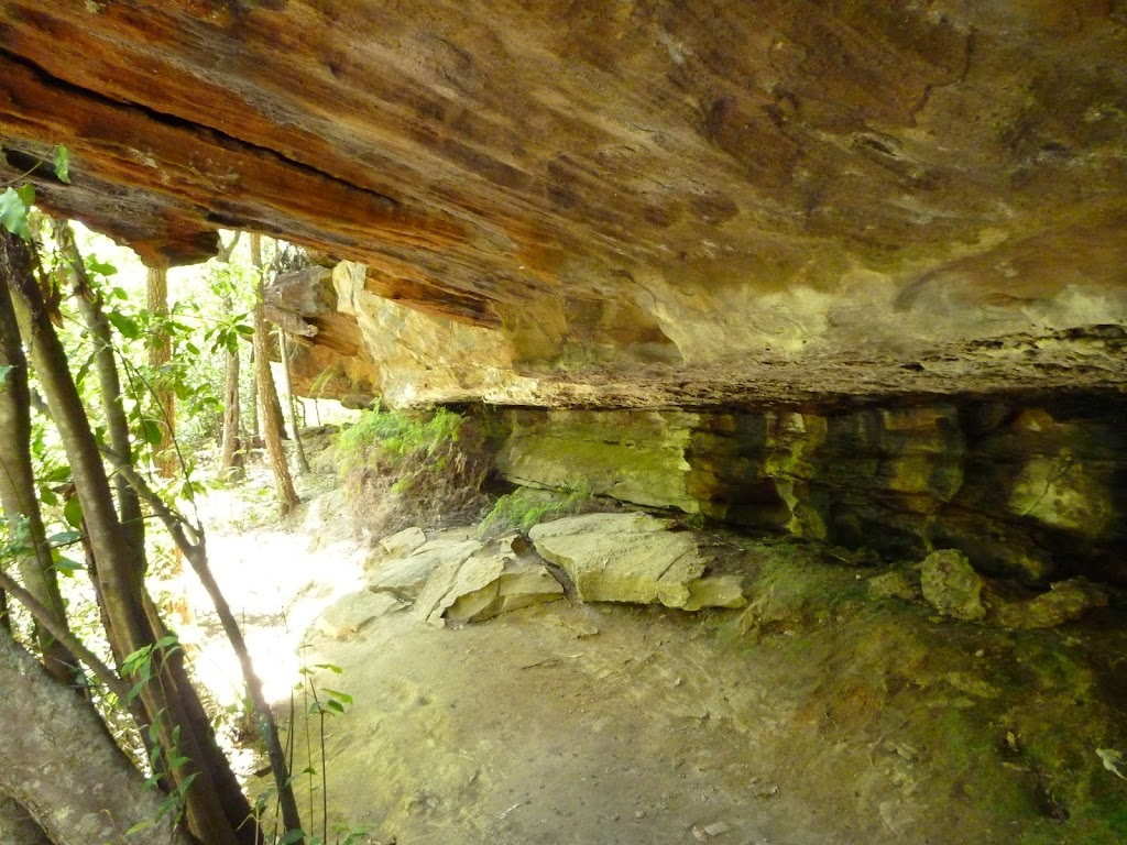 Southern Lyrebird Gully Cave (376979)