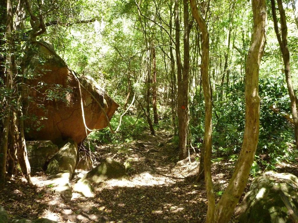 Dense forest in Lyrebird Gully