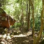 Dense forest in Lyrebird Gully (377192)