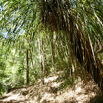 Grass tree at the bottom of Lyrebird Gully (377438)