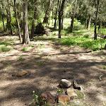 Calna Creek Campsite (south) (377639)