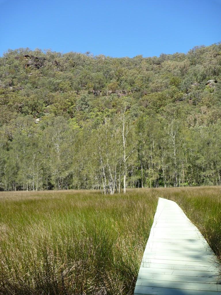 Crossing the saltmarsh Near Calna Creek