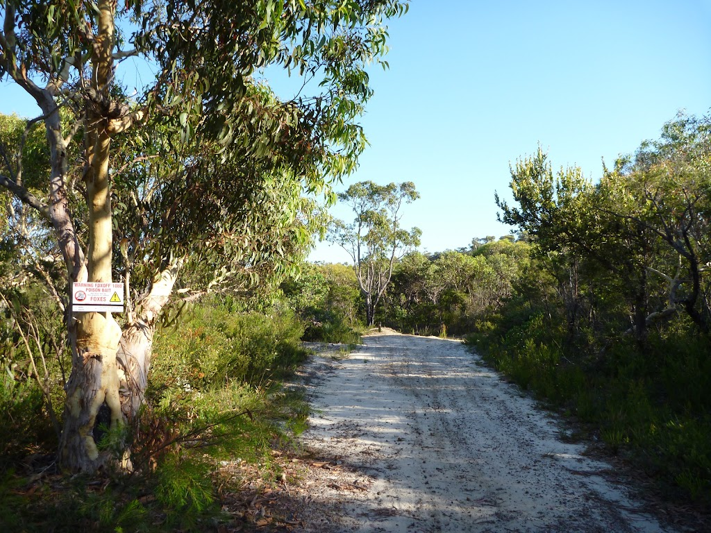 Walking along the wide sandy trail north of Patonga Dr