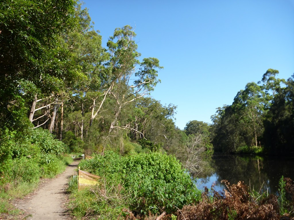 Beside the Lane Cove River north of Carters Creek