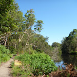 Beside the Lane Cove River north of Carters Creek (384431)