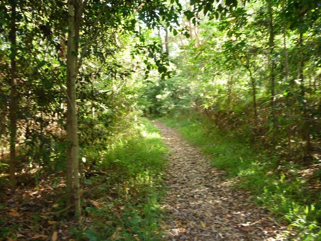 Bush track on Galgabba Point walk.