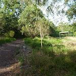 Galgabba Point walking track near Swansea (386981)