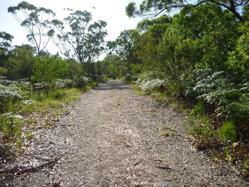 Wide track on the Galgabba walk, near Swansea